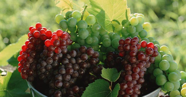 العنب يحتوي مركبات طبيعية تعالج الاكتئاب