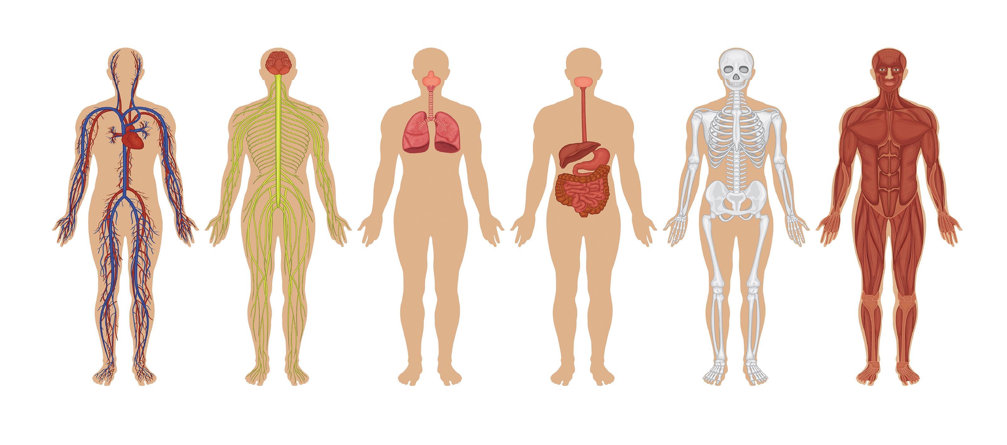 100 حقيقة طبيّة... عن أجسامنا