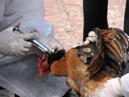 بلغاريا تبلغ عن تفش آخر لسلالة شديدة العدوى من إنفلونزا الطيور