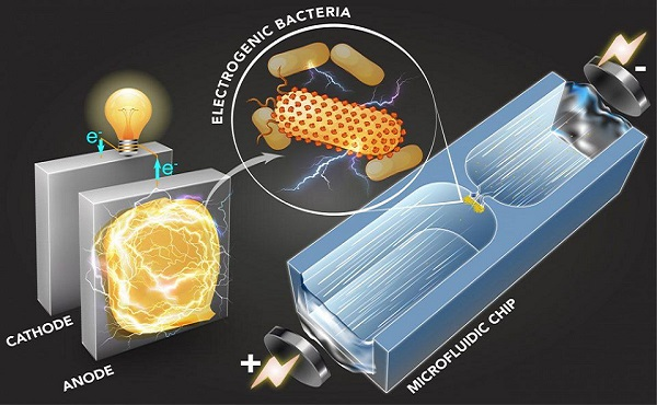 «البكتيريا» تنتج الكهرباء وتنقي مياه الصرف الصحي