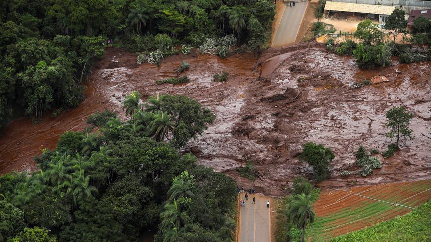 نفوق 300 ألف رأس من الأبقار جراء السيول بإستراليا