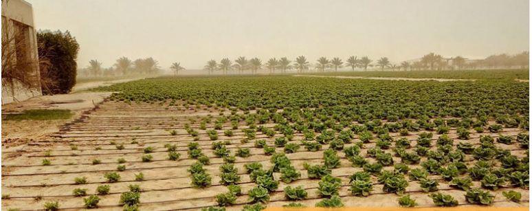 تساهُل في الحيازات الزراعية
