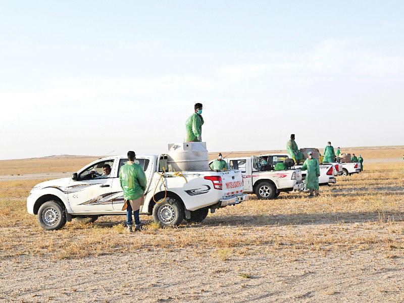 «الزراعة» تستدعي خبيراً عربياً لمكافحة الجراد بالوفرة
