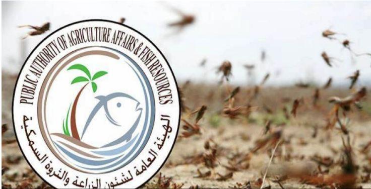 """""""هيئة الزراعة"""": رصد أسراب من الجراد في """"العبدلي"""""""