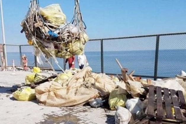 «البيئة»: قرار منع «الاحتطاب» يساهم في تقليل تدهور البيئة البرية